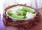 可睡在里面的巨大鸟巢床