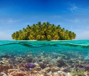 神奇的半水下摄影