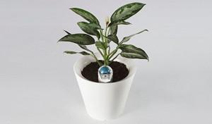 没时间吗?Nimbus智能花盆来帮你浇水