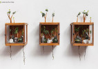 Camille Kachani 生长发芽的书柜 概念设计欣赏