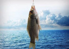 钓鱼不让鱼受伤的无伤害鱼钩