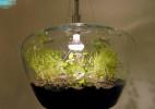 能养殖盆栽的吊灯,给你的生活更添一份光明(还能种菜)