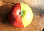 基因突变的苹果