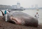 超真实的搁浅鲸鱼
