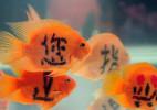 创意的纹身金鱼