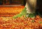 秋韵正浓的落叶唯美图片