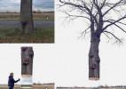 Daniel Siering树的错觉