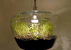漂亮的温室盆栽吊灯
