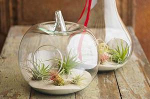 水果造型玻璃透明花盆