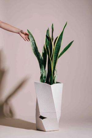 据说能延长盆栽植物寿命的花盆