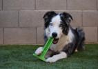 狗狗专用大号牙刷