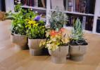 食物垃圾制作的100%降解花盆