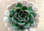 简单实用的雪糕棍手工作品 可爱的小花盆装饰