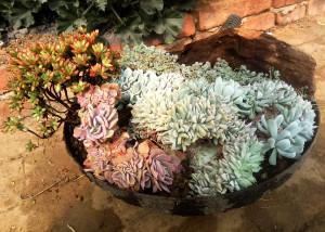 创意旧铁锅改造花盆