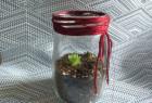 玻璃瓶花瓶 花瓶玻璃瓶...和它的真实故事