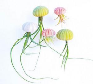 多彩海胆空气凤梨花盆