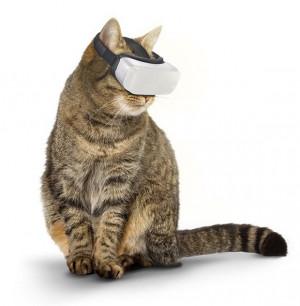 猫咪也要玩VR