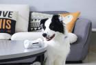 狗狗的电子狗骨头