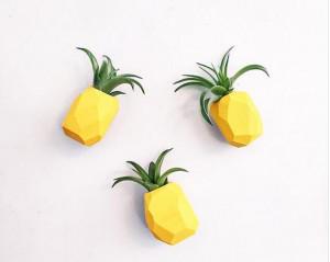 菠萝磁性空气凤梨花盆