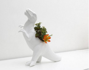 恐龙多肉植物花盆