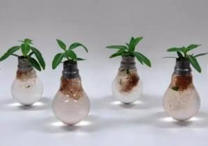 灯泡里的小花园,原来灯泡也能旧物改造