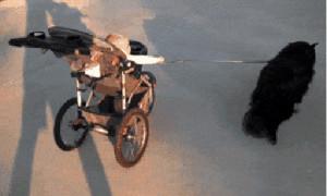 多功能遛狗神器