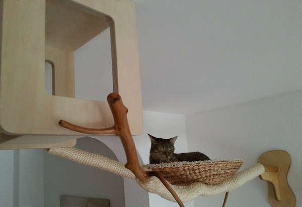 专门为宠物猫眯设计的游乐场