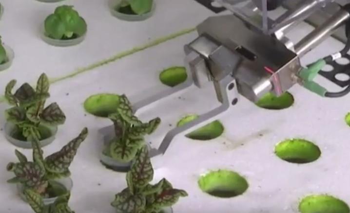 有机器人种植的无人农场,产量比传统种植高30倍