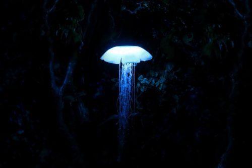 梦幻逼真的水母灯