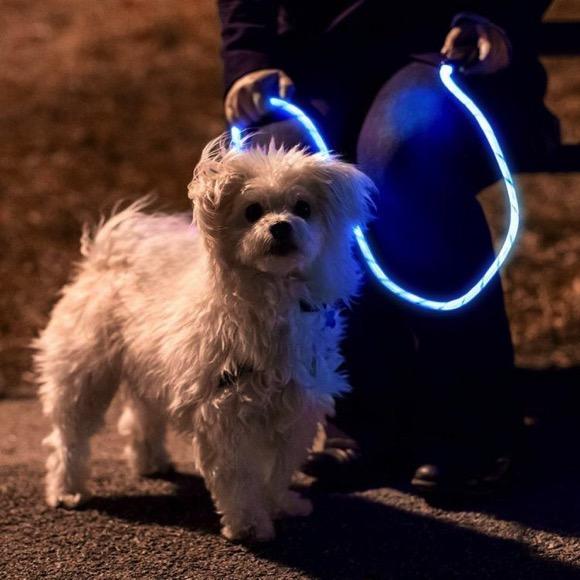 光亮光纤的狗绳