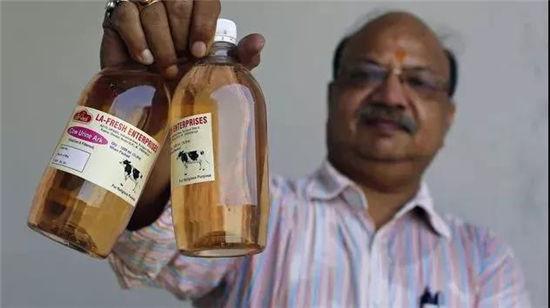 在印度,牛粪的作用强大到令你惊讶