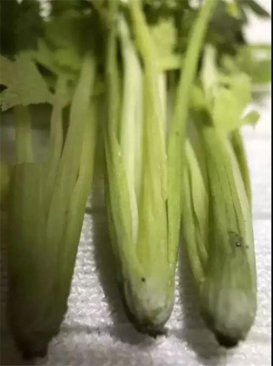 """90后全职妈妈""""造假""""蔬菜,抖音吸粉70万"""